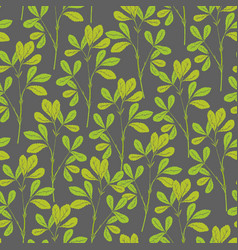 Botanical seamless pattern with fenugreek stems vector