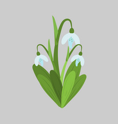 Spring flowers snowdrops sketch vector