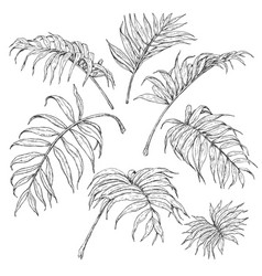 Palm fronds sketch vector