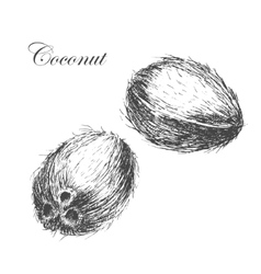 coconut hand drawn sketch with palm leaf vector image vector image