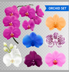 orchid flowers realistic transparent collection vector image