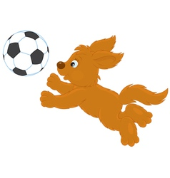 Pup playing vector image