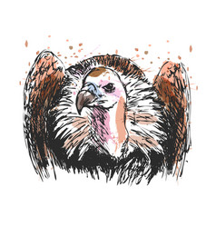 Colored hand sketch vulture vector