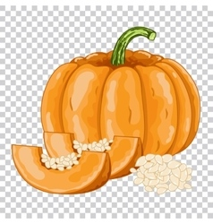 Pumpkin isolated organic food farm food vector