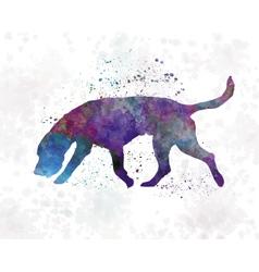 Artois hound in watercolor vector