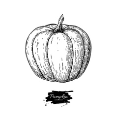 Pumpkin drawing isolated hand drawn object vector