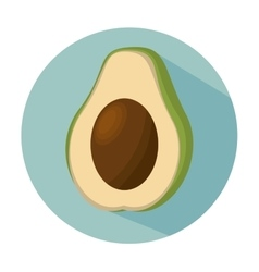 Avocado healthy fruit fresh vector