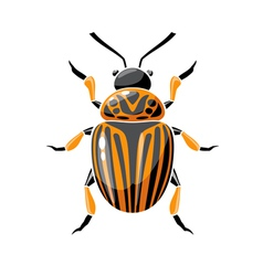 Colorado beetle vector
