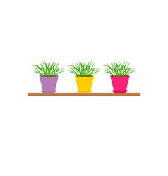 Three colorful pots with growing grass on shelf vector