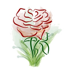 abstract rose on the white vector image vector image