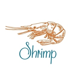 Marine shrimp or prawn sketch in engraving style vector