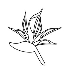 Bird of paradise flower thin line vector