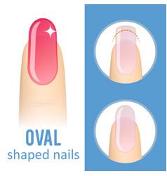 nail shape oval vector image
