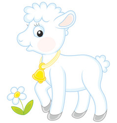 Small white lamb vector