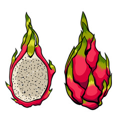 exotic dragon fruits on the bright white vector image vector image
