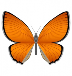 orange butterfly vector image