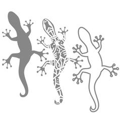 Salamanders vector