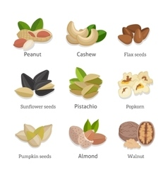Set of seeds and nuts vector image vector image