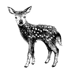 Hand drawn baby deer in vintage style vector