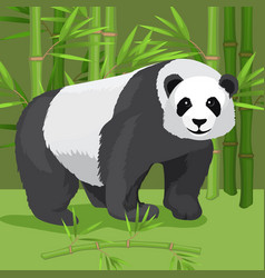 Black and white heavy panda stands on paws bamboo vector