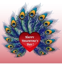 Beautiful Valentines day heart with peacock vector image vector image