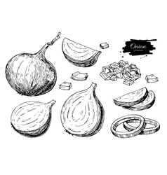 Onion hand drawn set Full rings and Half vector image vector image