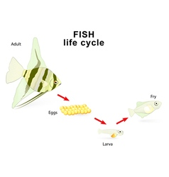 Fish life cycle vector