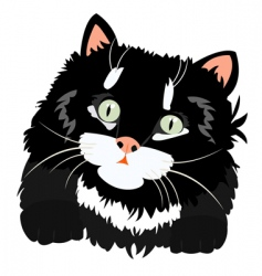 Nice black kitty on white vector