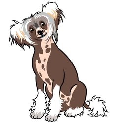 chinese crested dog vector image vector image