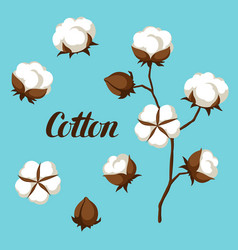 Set of cotton flower buds bolls and branch vector