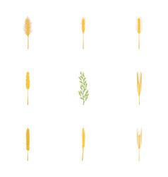 rice wheat cornryebarley icons set cartoon vector image