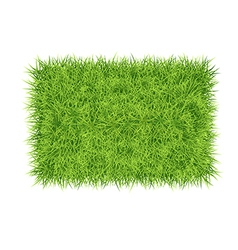 Grass carpet background vector