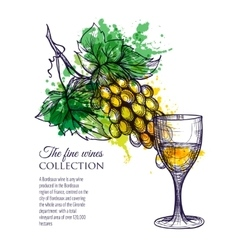 Glass of white wine with branch grapes vector
