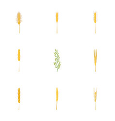 rice wheat cornryebarley icons set cartoon vector image