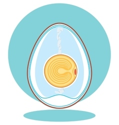 chicken embryo egg vector image vector image