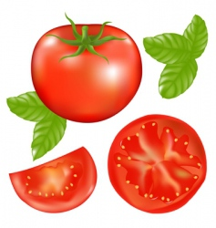 Tomato with slices vector