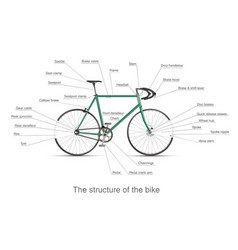 Infographic of the structure of bike vector
