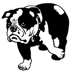 english bulldog black and white vector image vector image