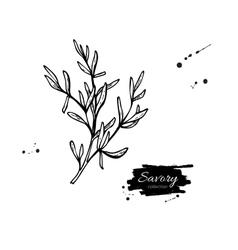 Savory hand drawn Isolated vector image vector image