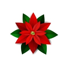 Poinsettia flower symbol of christmas vector