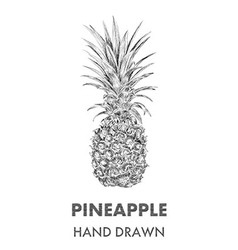 Sketch of pineapple hand drawn fruit collection vector
