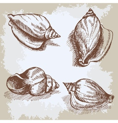 Seashells hand drawn graphic vintage etching vector