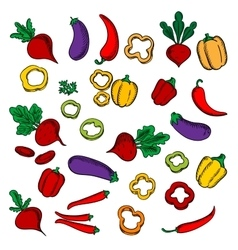 Beets eggplants chili and bell peppers vector