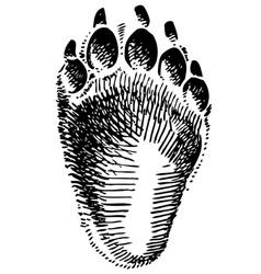 bear step vector image vector image