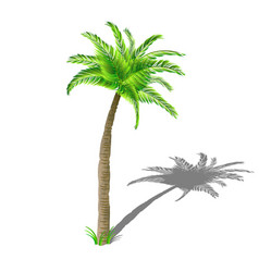 Coconut palm tree with shadow with green leaves vector