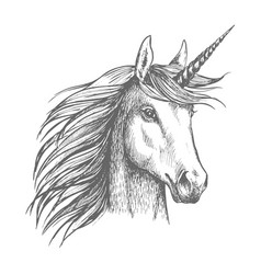 unicorn horse sketch with horn vector image