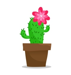 Blooming cactus in pot isolated on white vector