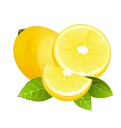 Fresh lemon fruit slice Realistic juicy citrus vector image