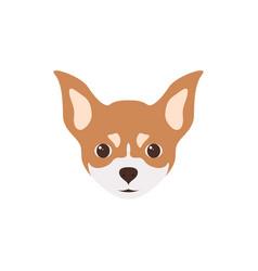 multicolor head of puppy chihuahua vector image