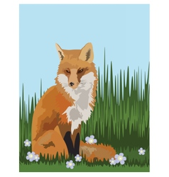 Fox in the field vector